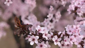 terapie florala Bach